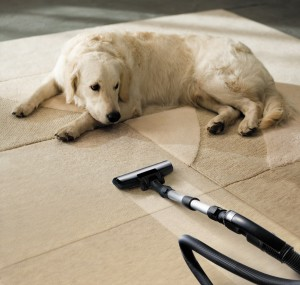 Carson City Carpet Cleaning - we get the poop out.